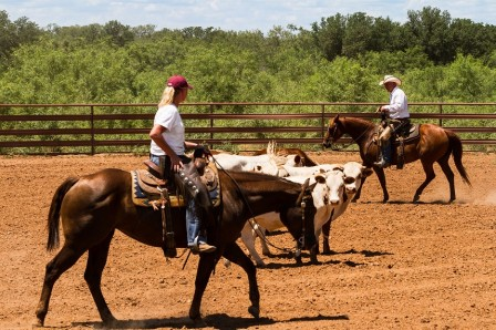 Ted & Kristi Working Cattle