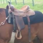 Lightweight Saddle Blanket